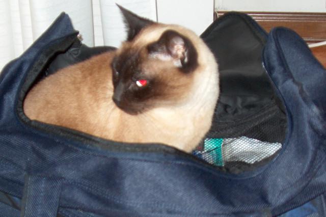 Simba, un gatto in valigia