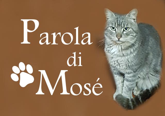 Parola di Mosè (il gatto, non il predicatore)