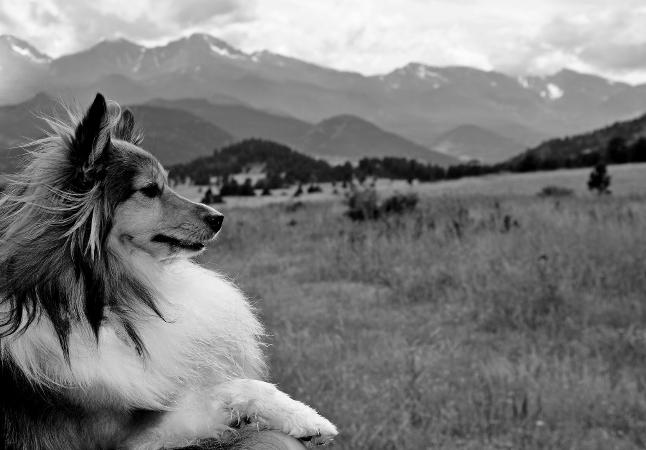 Lassie torna a casa, ma non torna indietro