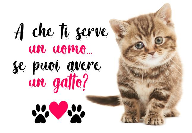 A che ti serve un uomo se puoi avere un gatto? #meglioungatto per San Valentino